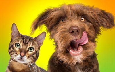 Excès de poids , obésité chez le chien et le chat