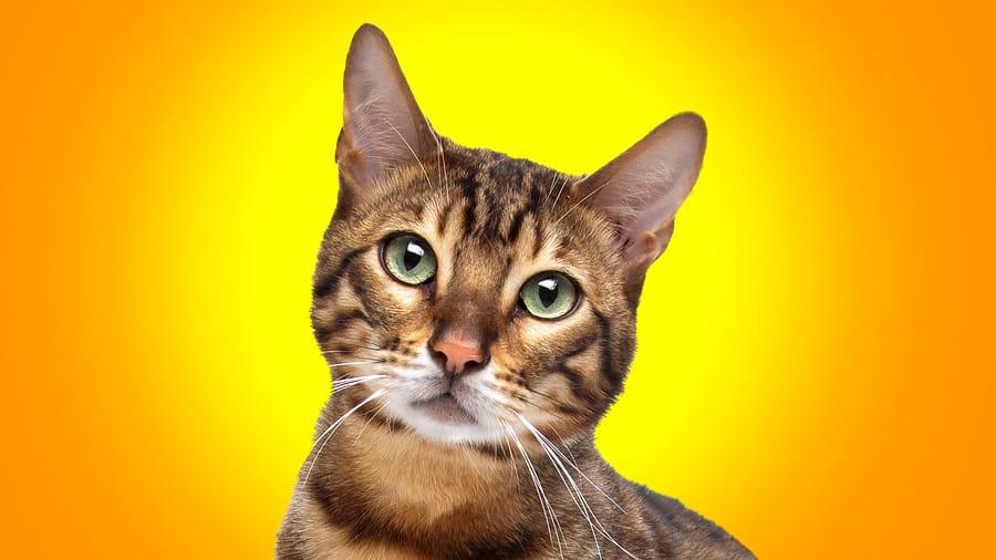 Conseils et astuces pour bien soigner votre chaton…