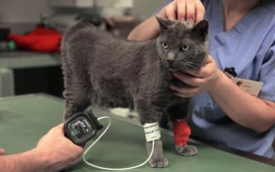 Zuccherino : le chat qui avait perdu la vue !