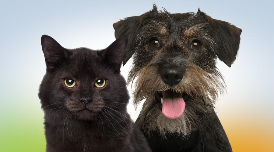 Otite du chien et du chat